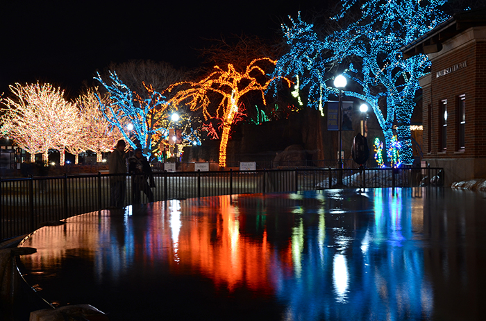 Family Fun - Christmas Lights lighting up lagoon at a Chicago Zoo.